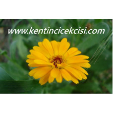 www.kentincicekcisi.com